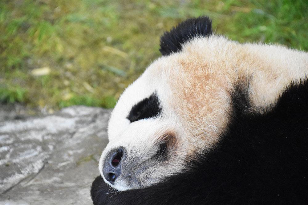 和歌山にある動物の楽園「アドベンチャーワールド」がおもしろい!