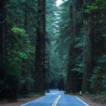 世界一の巨木が林立するレッドウッド国立・州立公園でヒーリング