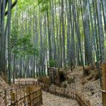 女性に人気! 千葉・佐倉の城下町を小粋に散策
